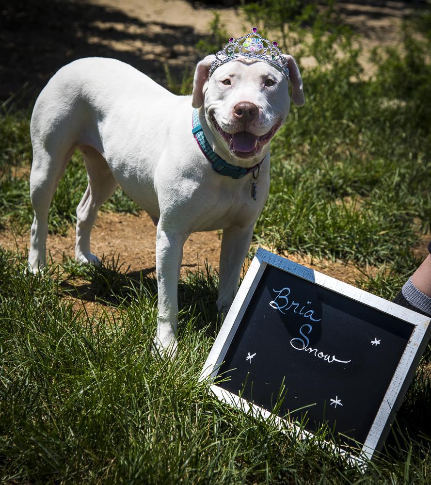 Bria - adoptable dog in Denver, CO