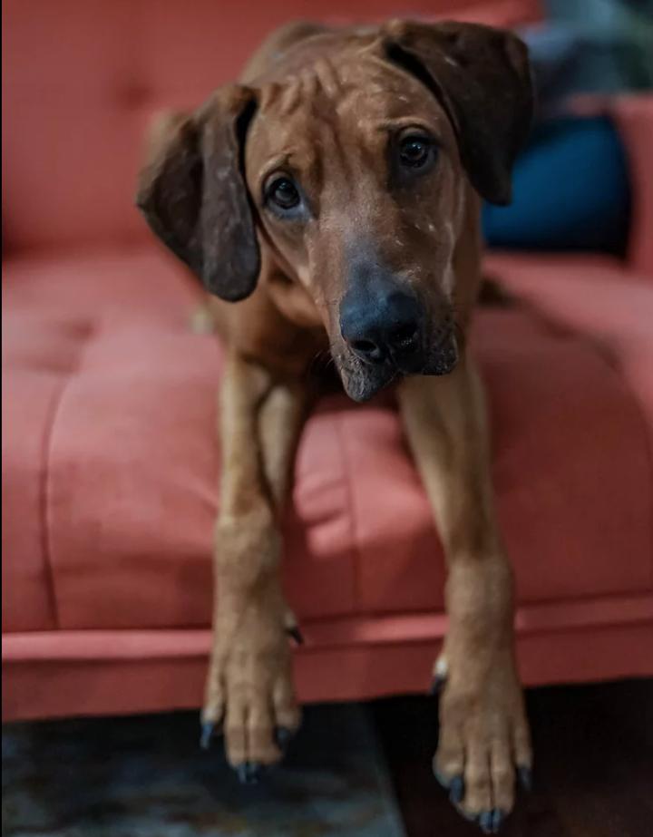 adoptable dog in denver, co