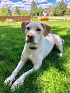 Kasper Hank is available for adoption in Denver, CO