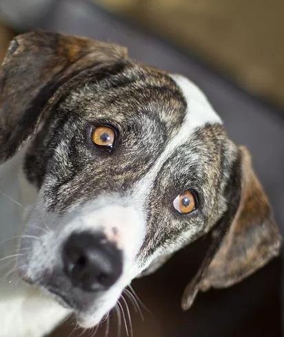Heidi – Adopted!