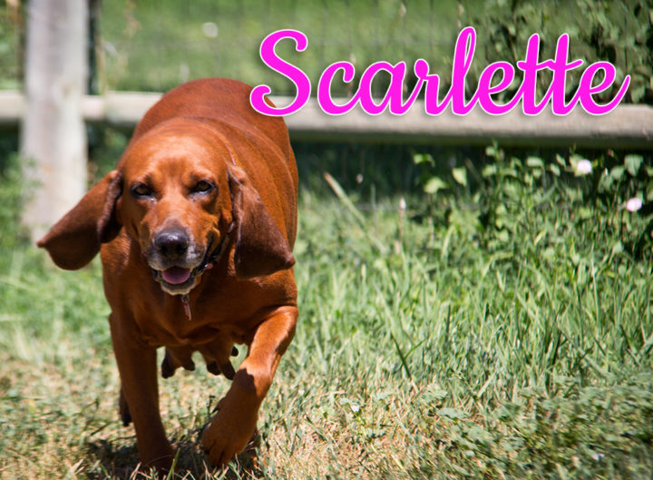 Scarlette! Mommy of these amazing puppies.