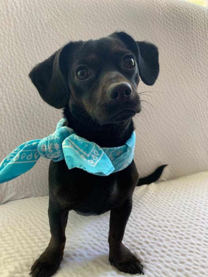 Sophie – tiny baby girl, ready for you!