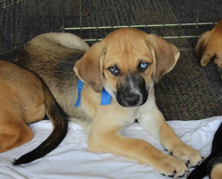 Frank Blue – Adopted!