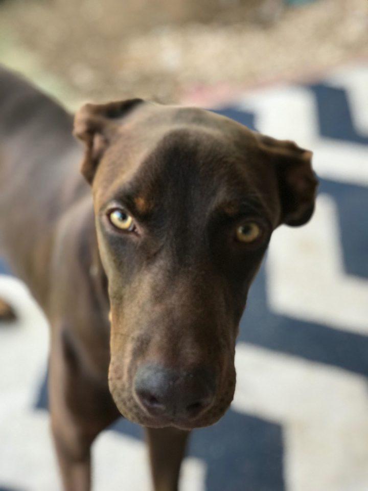 Waylon – Adopted!