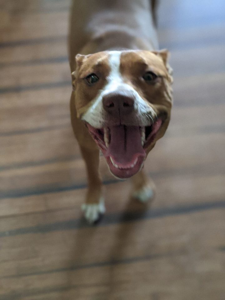 Daisy Donut – ADOPTED!
