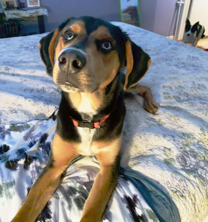 Link – ADOPTED!!