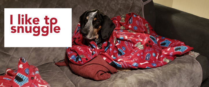 Hunter the Bluetick – ADOPTED