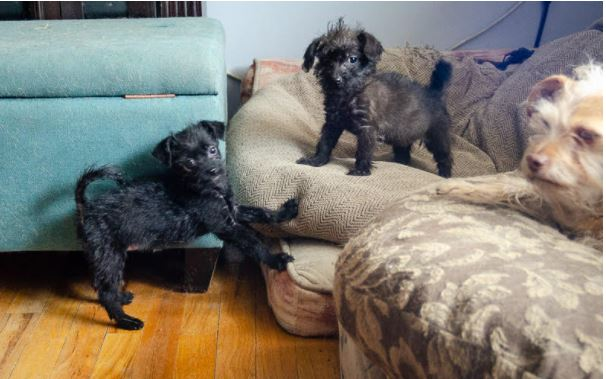 Talley Mauve and Pippa Mary – ADOPTED!