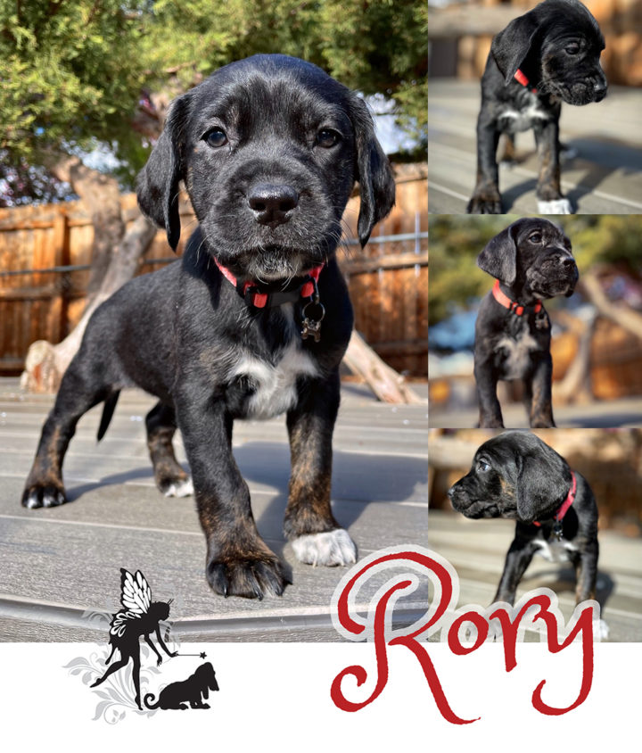 Rory – Adopted!