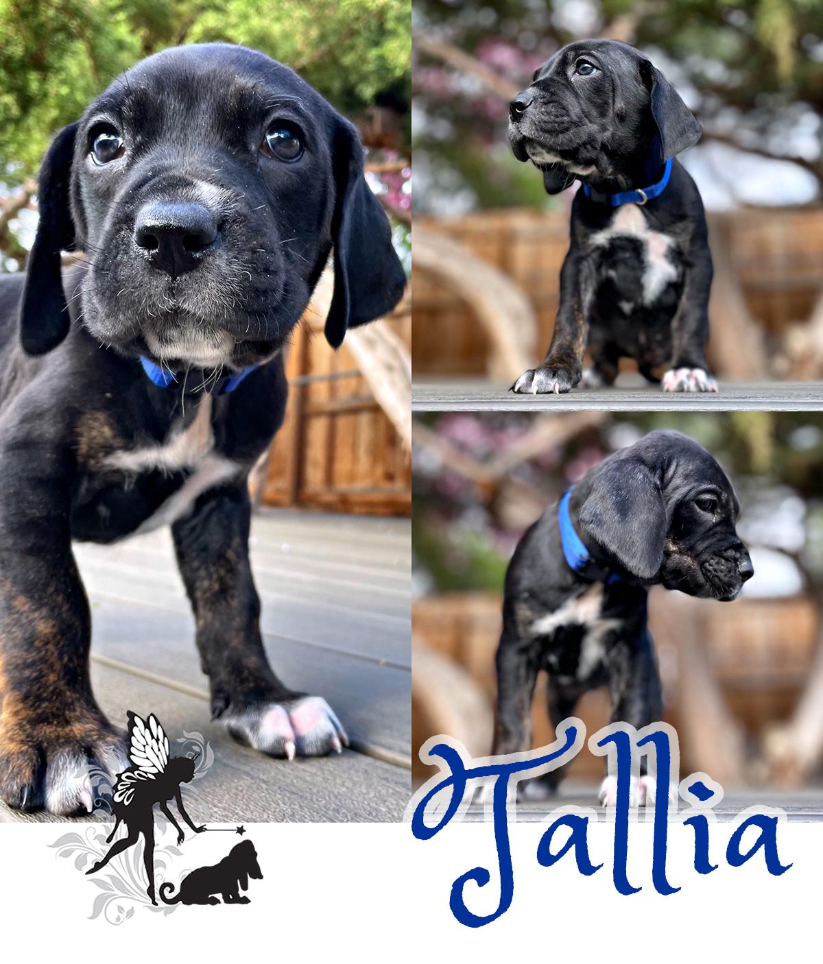Tallia – Adopted!
